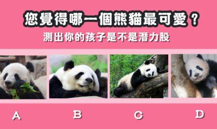 最可愛,熊貓,孩子,潛力股,心理測驗,星座寶寶
